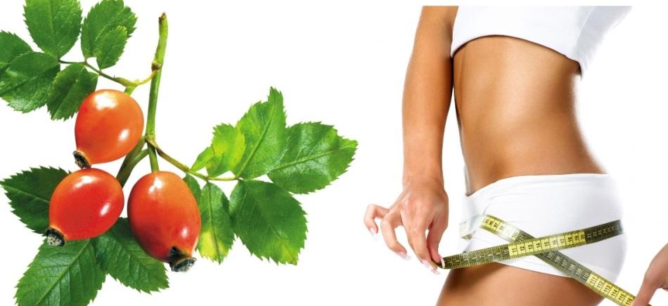Как правильно заварить шиповник в термосе - рецепты на 0,5 л, 1 л, чтобы сохранить витамины