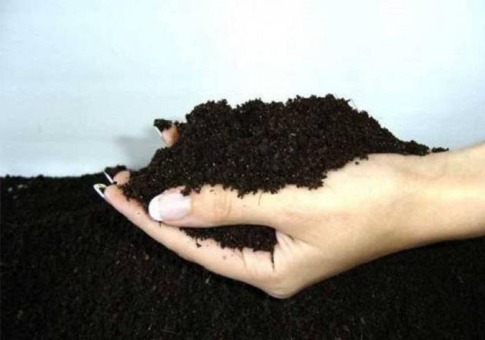 Удобрение грунта для посадки шиповника