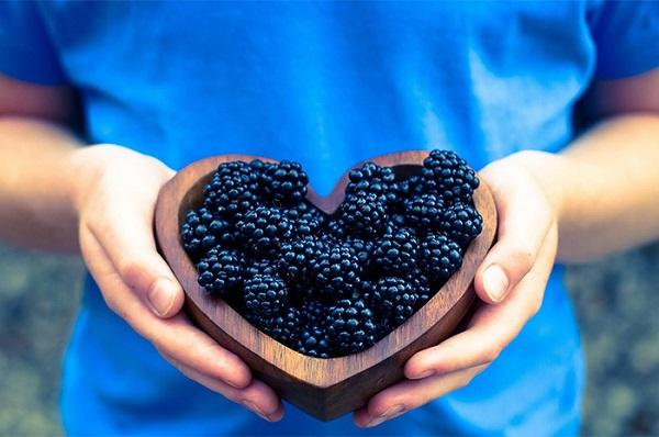 Полезные свойства для организма и противопоказания ягод ежевики