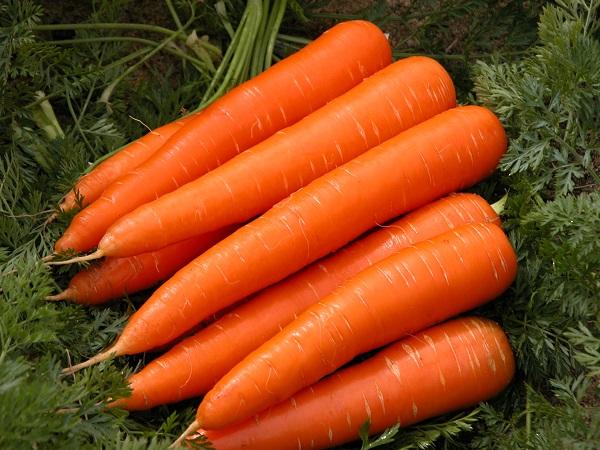 Брусника с морковью