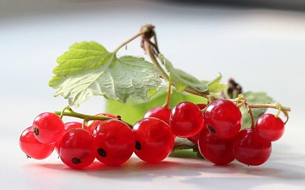 Плоды и листья красной смородины