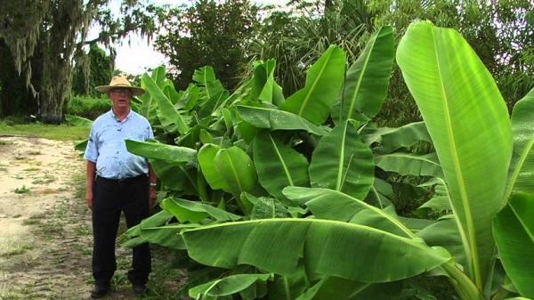 Как вырастить бананы
