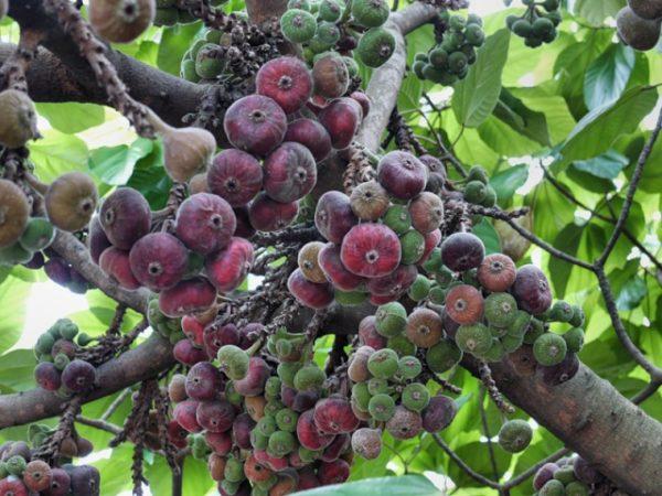 Виды выращивания