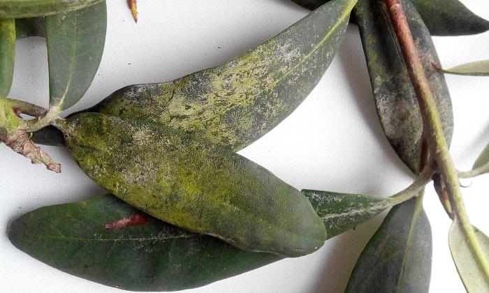Болезни растения