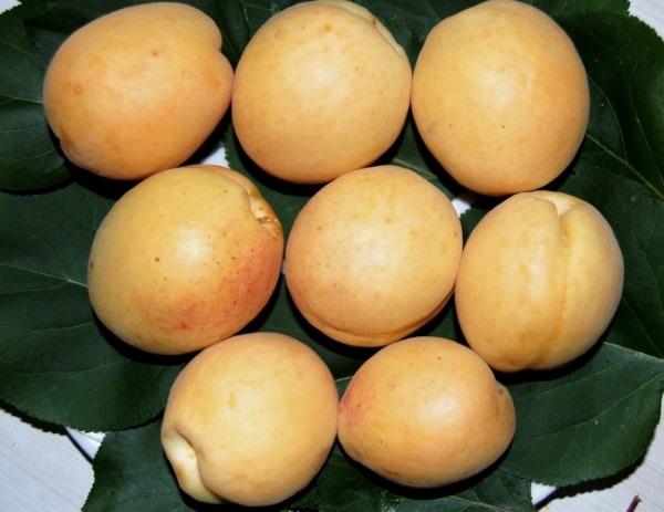 Плоды крупные
