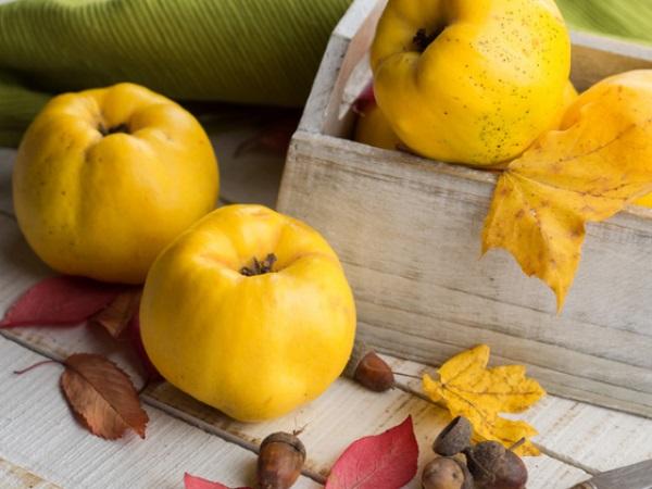 Осенний фрукт