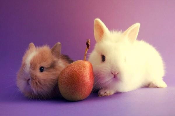 Кроликам нравятся груши