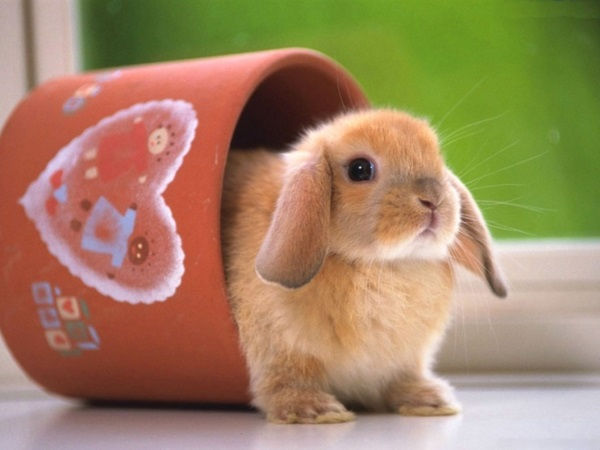 Кролики едят часто